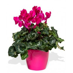 Planta5